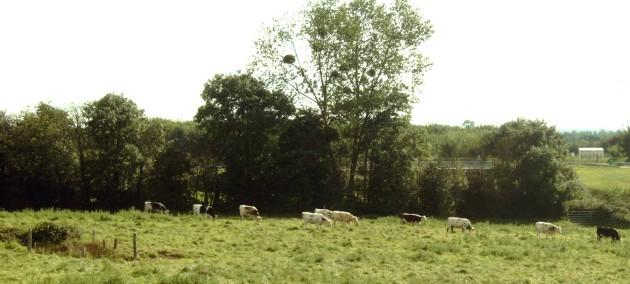 Heckenlandschaft in der Normandie