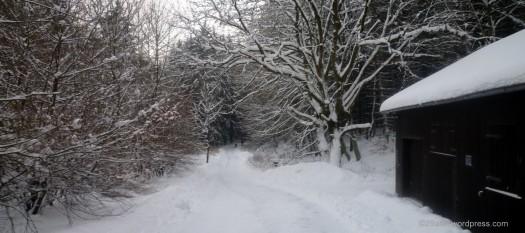 Winterwanderung 4